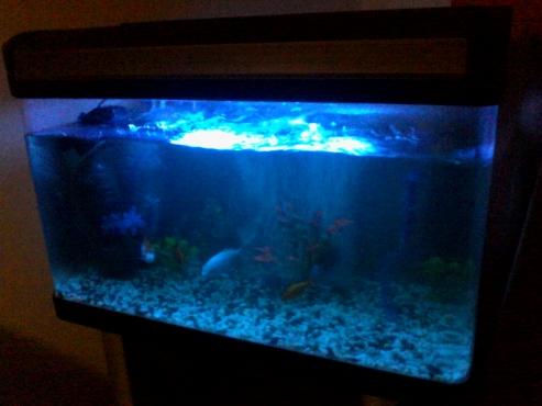 Urgent Sale Fish Tank
