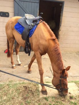 Freelance Riding Instructor - I COME TO YOU