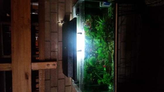 Aquarium with Stand and Fish and All Accessories Included For Sale
