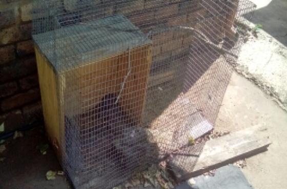 Rabbit/pet Cage