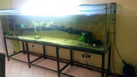 3m Long X 800m Wide X 1m High Fishtank