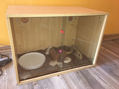Lovely 2 Ball Python  with cage and heater