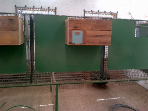 Parrot Breeding Cages for sale