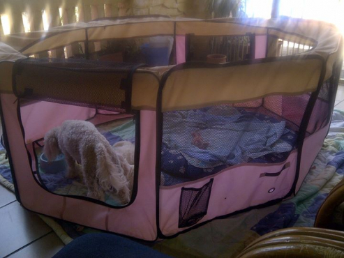 Playpen for puppies