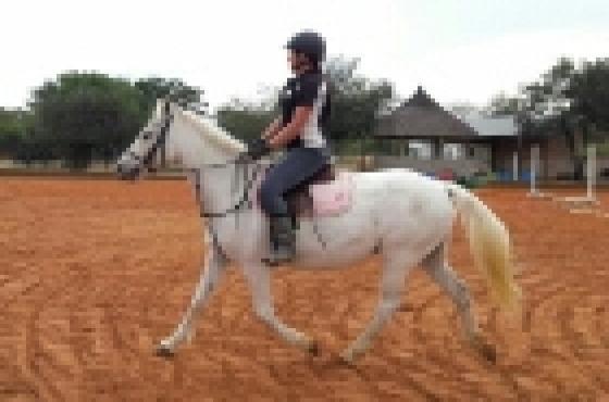 Pony for sale