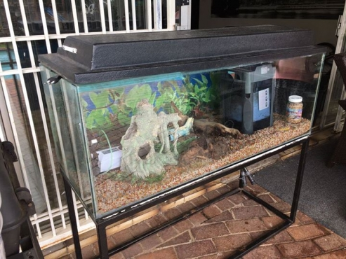 Complete 4 foot fish tank.