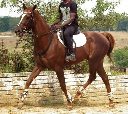 Stunning Tb mare
