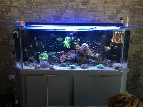 Marine fish tank
