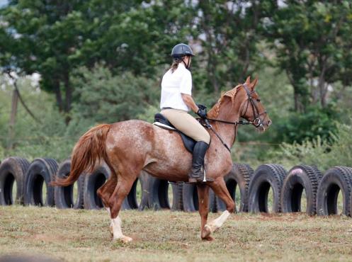 Appaloosa cross mare for sale