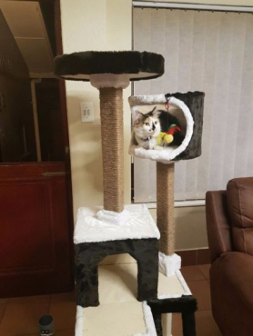 Brand new cat condo scrating post