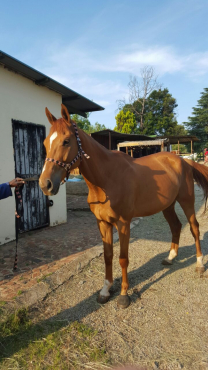Horses for halflease