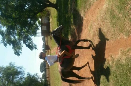 Walliese ponie