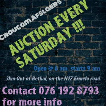 Auction every Saturday