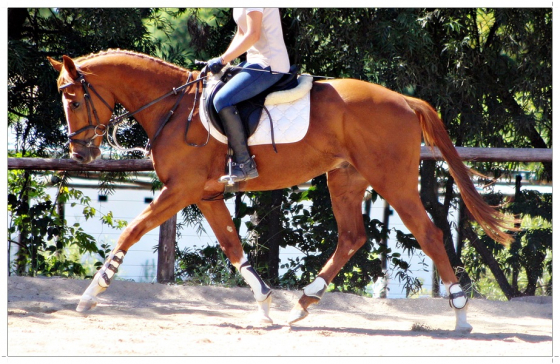 EXTREMELY FLASHY TB COLT FOR SALE