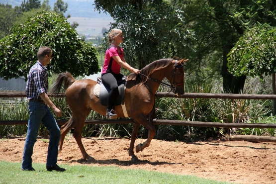 Beautiful American saddle bred mare for sale