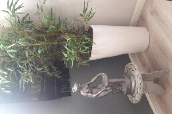 Artificial Plant in White Triangular Pot