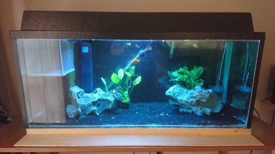 Fish tank full setup + Stand