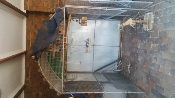 aviary's for sale