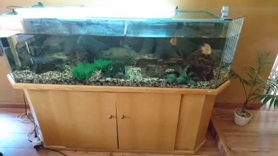 500litre tropical fish tank