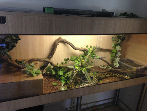 6ft snake cage with accessories