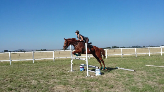 Thoroughbred urgent sale