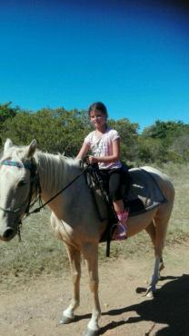 Palomino X Breed Pony Mare - Kids Ride her
