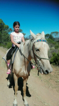 Palomino X Breed Pony Mare - Kids Ride her