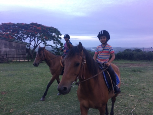 Bay Gelding with Tack