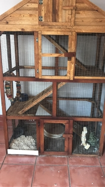 Chinchilla Cage Second Hand