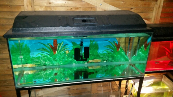 5 Fish tanks MUST GO!!
