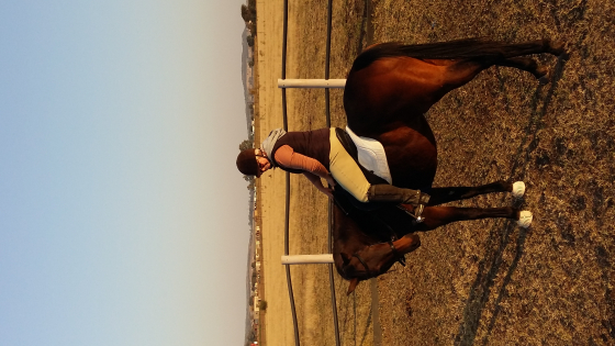 An amazing TB gelding for sale/lease