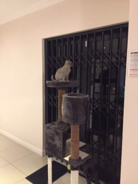 Brand New Cat Condos Only R750.00