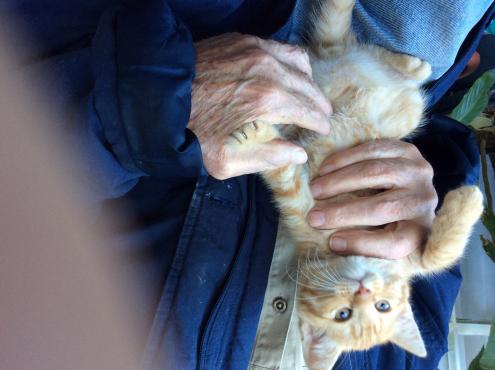 Rag doll kittens for sale