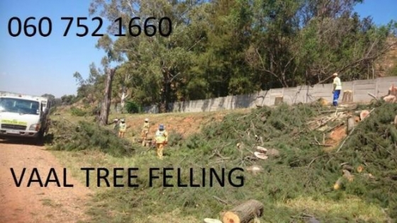 0607521660 , Fast and affordable tree fellers in Gauteng . tree fellers vaal