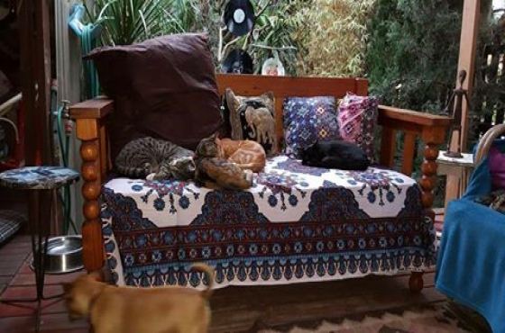 Origeon pine couch for sale