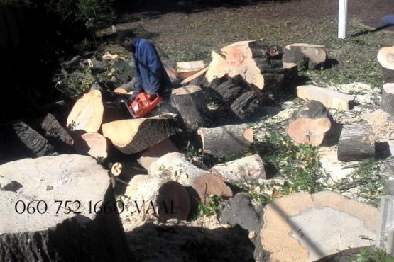 0607521660 , Fast and affordable tree fellers in Gauteng . tree fellers vaal