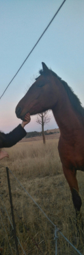 2x horse's for R8000.00