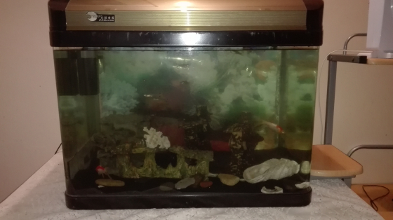 RS ELECTRICAL BEVELED GLASS AQUARIUM