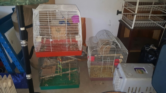 3 x bird cages