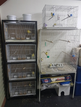 Fyfe Canary breeding pairs with breeding cages