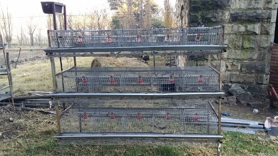 Quail Cages