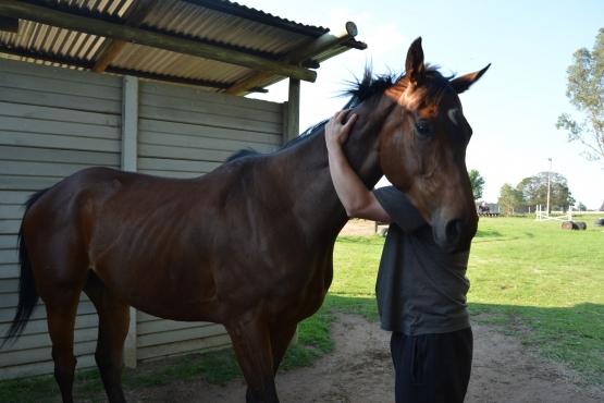 Horse for Full or Half Bait