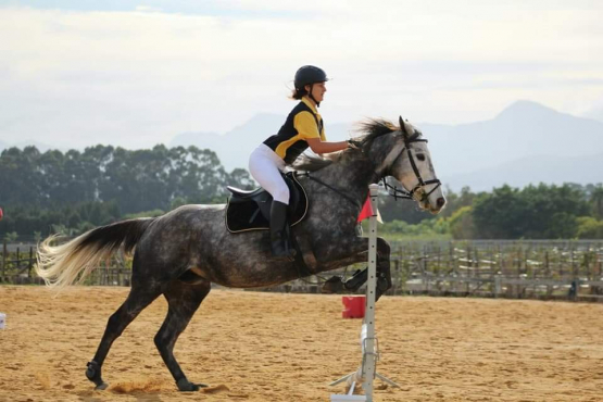 Beautiful, sweet TB Mare for sale