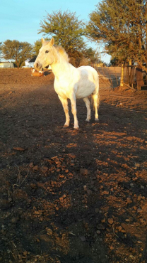 Mares 1 white 5yrs 1 dark brown 2yrs