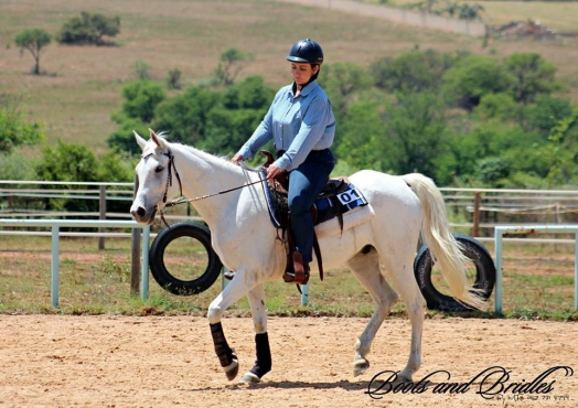 Registered arabian gelding for sale
