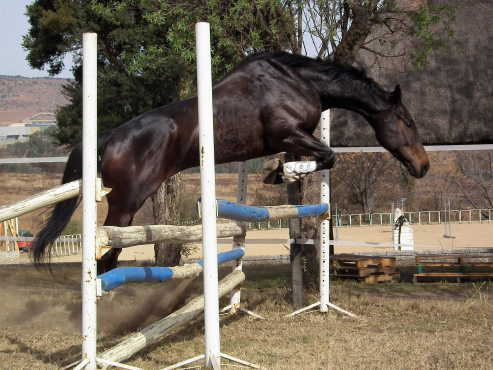 Ideal Hack - Suitable for nervous riders or novice riders