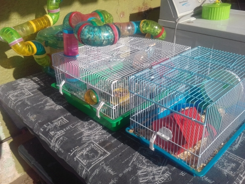 3 x Hamster Cages complete