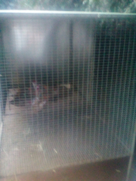Bargain! Large rabbit/chinchilla/bird cage for sale
