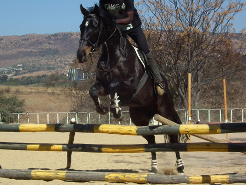 Absolutly stunning tb gelding - wow wow wow