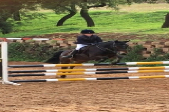 Forward going second pony 13.2hh
